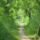 green path by Susan Maxwell via Freeimages