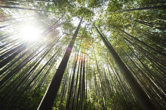 Trees sunlight