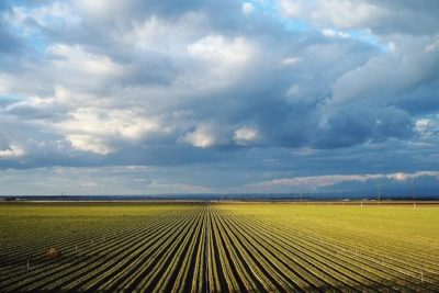 Field by Gina Collechia via Flickr