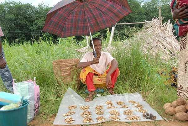 WOMAN NUTS INDIVIDUAL