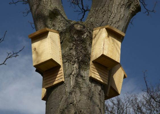 Man made bat roosts