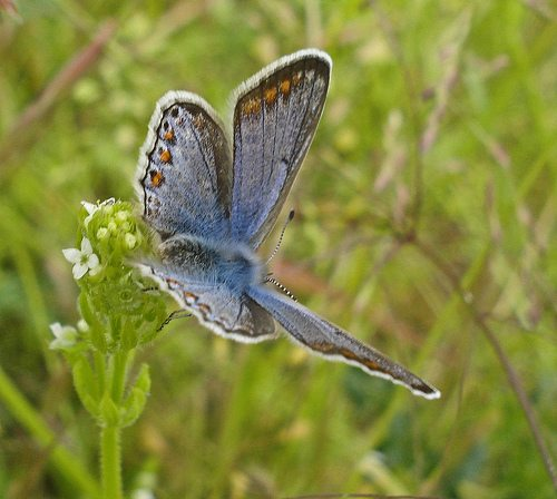climate change will affect invertebrates and vertebrates environmental sciences essay Climate change is predicted to have major implications for species and ecosystems, acting as a driver of biodiversity loss in its own right and amplifying the effects of existing threats 1,7–9.