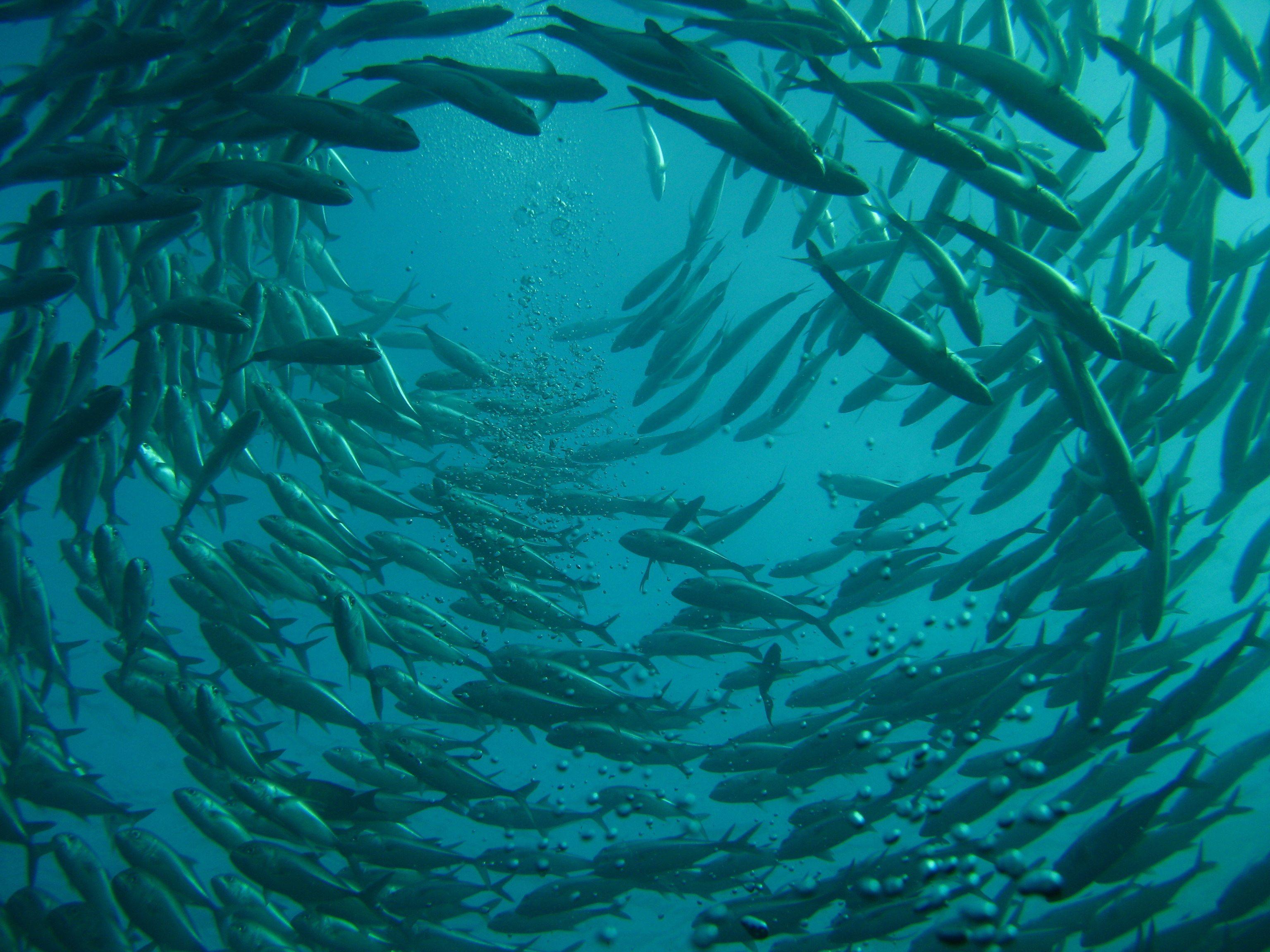 Mercury Pollution In Upper Ocean Has Tripled Since