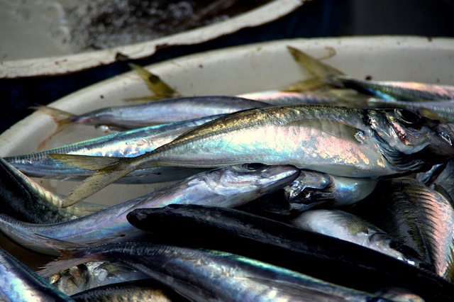 Uk shoppers show increased appetite for sustainable for Most sustainable fish