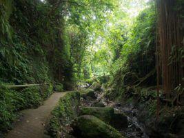Bali by Jennifer Gergen via Flikr