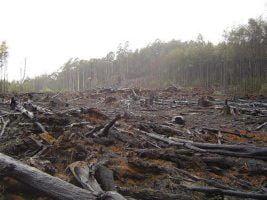 Deforestation by crustmania via Flickr