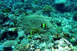 Great Barrier Reef 34 by Eulinky via Flikr