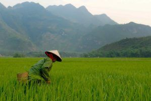 Vietnam by M M via Flickr
