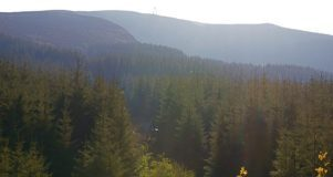 Forestry At Work By Irish Fireside Via Flickr