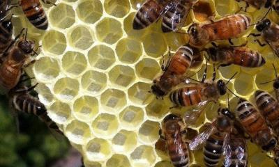 British People In Favour Of Protecting Bees with EU Rules, According To YouGov Survey