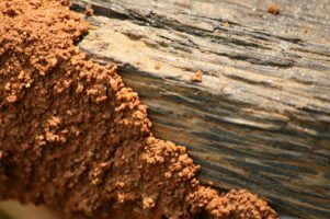 termites by Prashanth dotcompals via Flickr