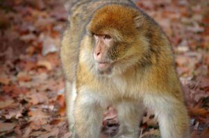 30 Year Wait Over As International Community Rallies To Protect Monkey Species