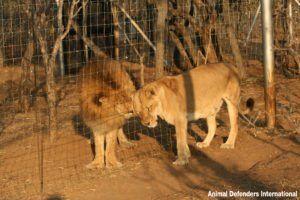 Leo and Muneca