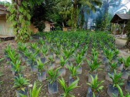 palm-oil-nursery-by-al-rah-bia-flikr