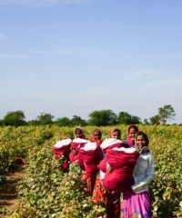 According To New Report Gender Equality Is Key To Boosting Cotton Industry