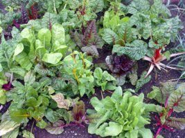 Vegetable garden by Nick Saltmarsh via Flickr