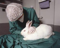 animal-testing-by-understanding-animal-research-via-flickr