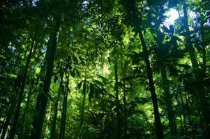 rainforest by ben britten via Flickr