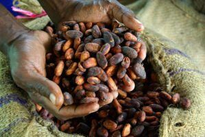 Fairtrade West Africa Producer Network