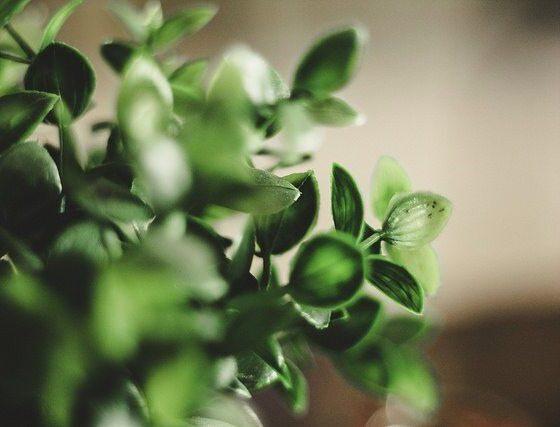 Eco. By Γιώργης Χωραφάς Via Flickr