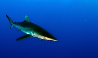 'Seismic Shift' In Shark Conservation Following New CITES Protection