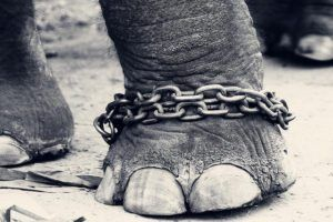 CHAINED!!! by Vinauth Chandar via flickr