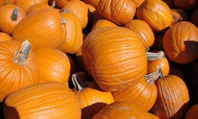 Pumpkins by VasenkaPhotography via flickr