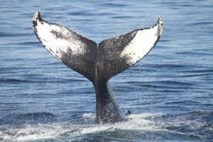 Whales by Isaac Kohane via Flickr
