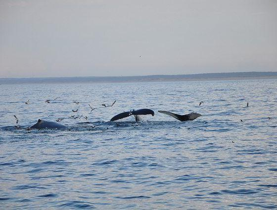 Whales by Tim Taylor via Flickr