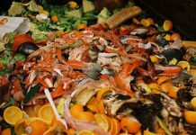 True Extent Of Scotland's Food Waste Revealed By New Research