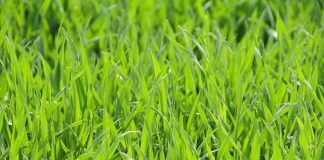 Britain's Gas Solution Could Be Found In Grass According To Ecotricity