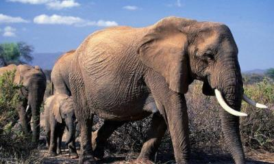 UK Leading Global Fight Against Illegal Wildlife Trade
