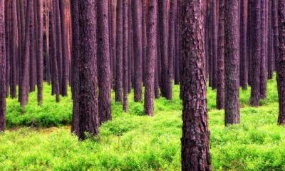 Forest Value Must Be Defined To Implement Paris Agreement