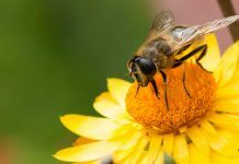 Scientists Warn Urgent Action Is Needed To Stop Pollinator Decline