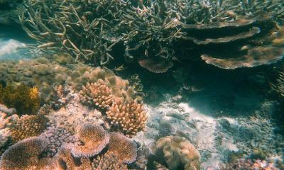 Agincourt Reef, Great Barrier Reef, Queensland (483754) by Robert Linsdell via flickr