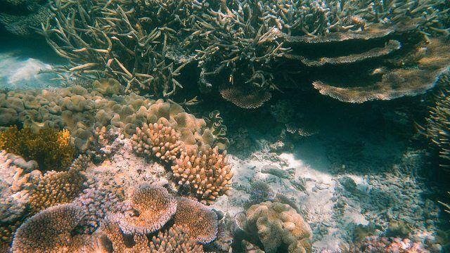 Agincourt Reef, Great Barrier Reef, Queensland (483754) by Robert Linsdell via flickr