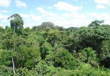 amazon-rainforest-by-ivan-mlinaric-via-flickr