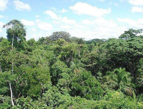 amazon-rainforest-by-ivan-mlinaric-via-flickr