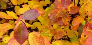 Autumn Leaves by Aika Felt Works via flickr