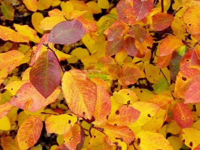 Autumn Leaves by Aika Felt Works via flickr