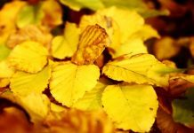 Autumn Leaves by slowshooting via flickr