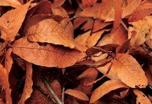 Brown leaves by jrsnchzhrs via flickr