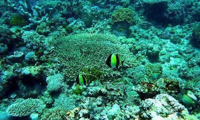 great-barrier-reef-34-by-eulinky-via-flickr