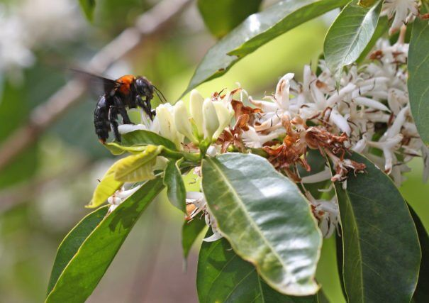 Ten Policies To Protect Vital Pollinators Revealed By Scientists