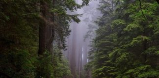 road-through-forest
