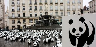 WWF by DocChewbacca via flickr