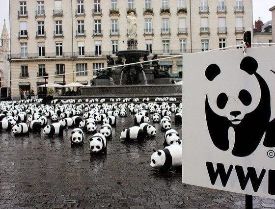 WWF by DocChewbacca via flickr