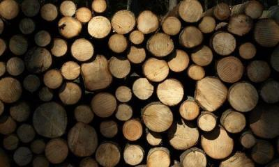 Woodpile by Chris RubberDragon via flickr