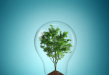 bulb-light-with-tree-inside-on-blue-background-by-mattwalker69-via-flickr
