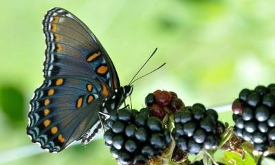 butterfly by heidi via flickr